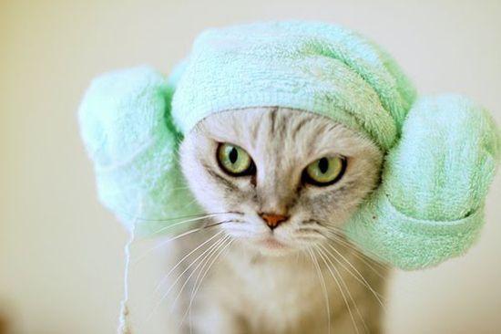 Милые котики, замотанные в полотенце (20 Фото)