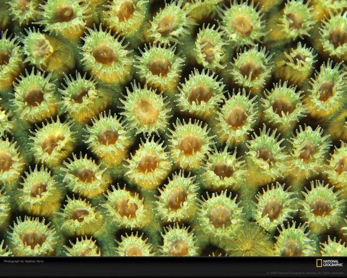 Кораллы нереальной красоты (10 Фото)