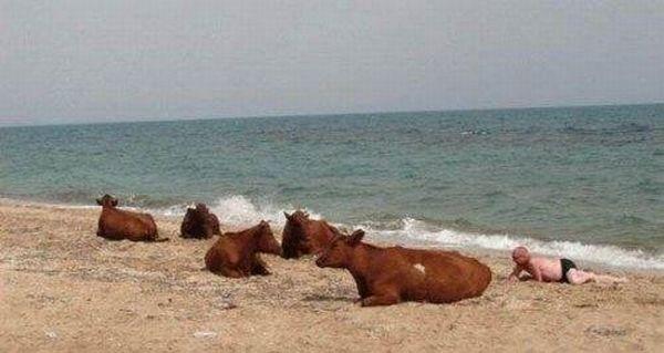 Пляжные приколы и смешные моменты (25 фото)