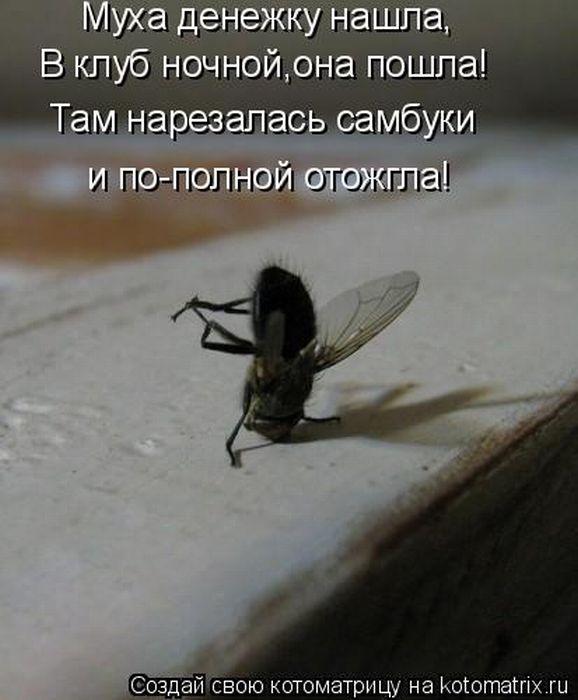 Приходила к Мухе Бабушка - пчела, Мухе-Цокотухе Медовухи принесла.  Нынче Муха-Цокотуха - Именинница!