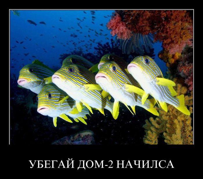 Небольшая стая желтых рыб плавают друг возле друга.