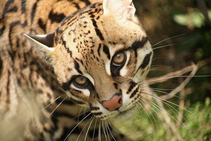 Endangered Mammals  List  Earths Endangered Creatures