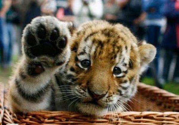 Животные, которые дают «пять» (16 Фото)