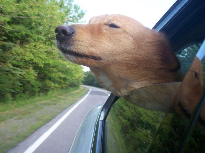 Собаки (111 фото)