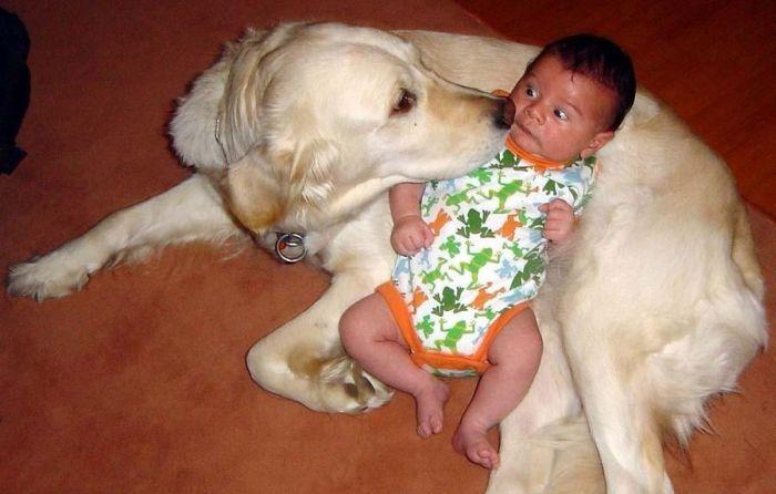 http://de.trinixy.ru/pics4/20110602/dogs_94.jpg