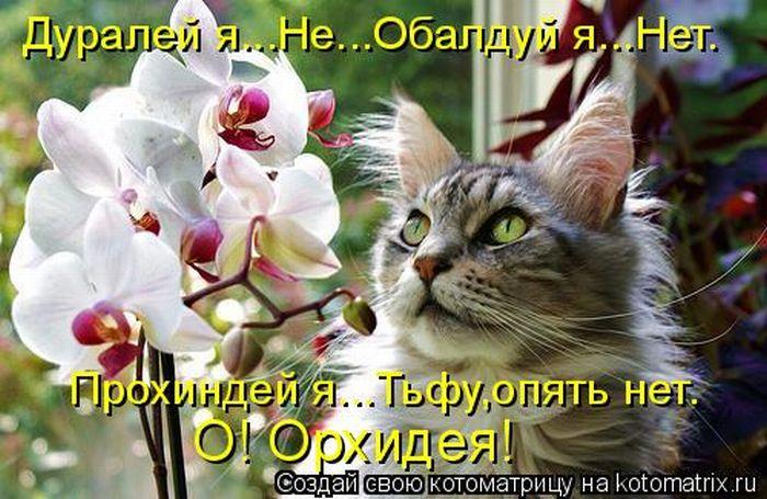 http://cdn.trinixy.ru/pics4/20110603/kotomatrix_31.jpg