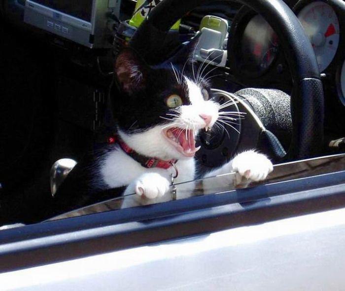 Любителям котиков посвящается (26 Фото)