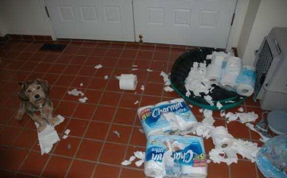 Домашние любимцы, которые делают пакости (23 Фото)