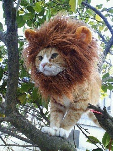 Смешные коты, переодетые в других животных (27 Фото)