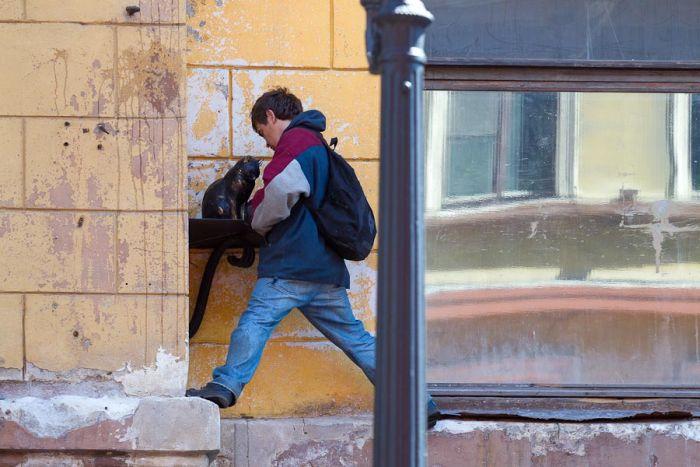 Кот Елисей из Санкт-Петербурга (6 фото)