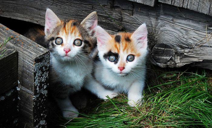 Забавные котята (100 фото)