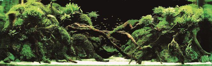 Шикарные аквариумы (21 фото)