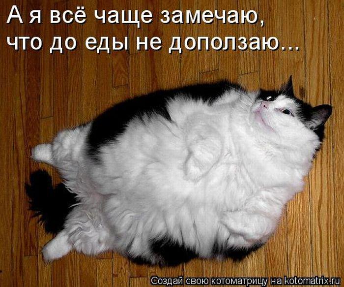 Поделиться в Twitter. коты. кошки.  Сохранить как ссылку. юмор.