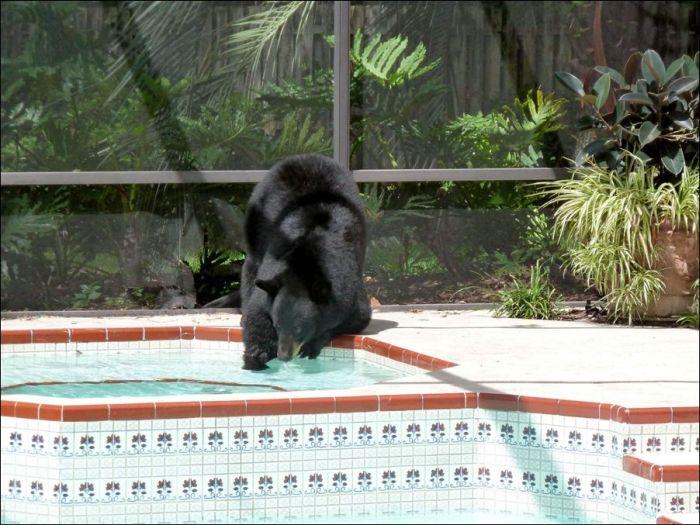 Медведь зашел в гости (4 фото)