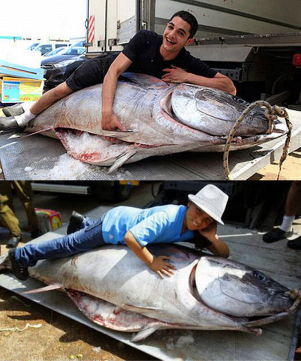 Огромный тунец (7 фото)