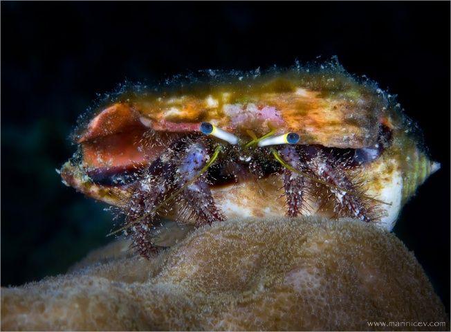 Удивительный подводный мир (18 Фото)