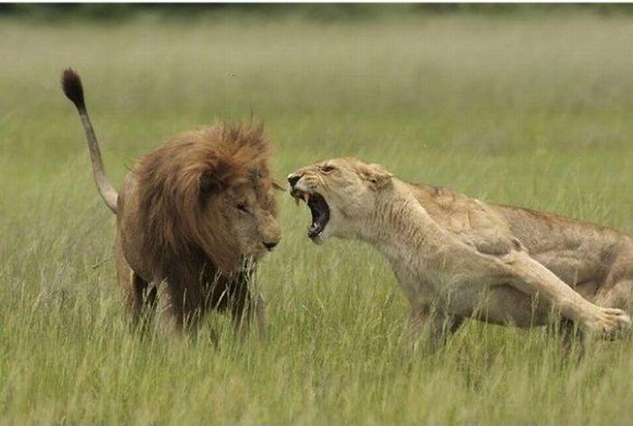 Жены кричат на мужей (8 фото)