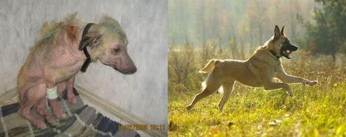 Спасенные животные (32 фото)
