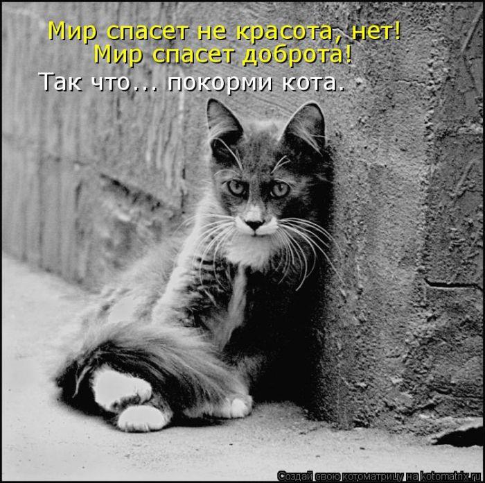 Котоматрица: Я бедный кот живу в серых я подвалах, ем, что найду, а сам мечтаю о сосиске.  Люди, добрые если вы
