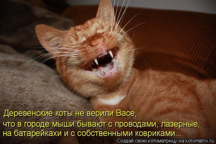 Забавные демотиваторы с котами.