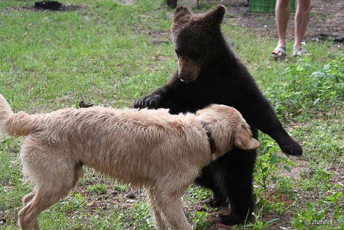 Встреча с жителями леса (16 фото)