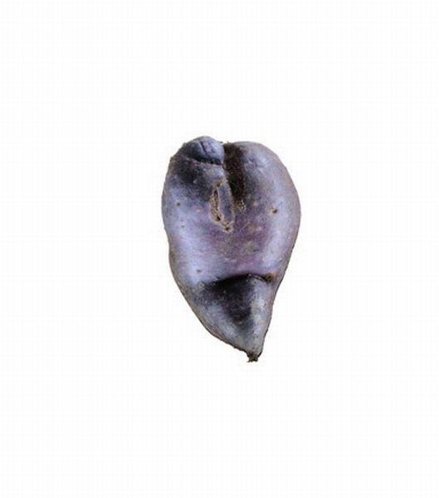 Картофель (18 фото)