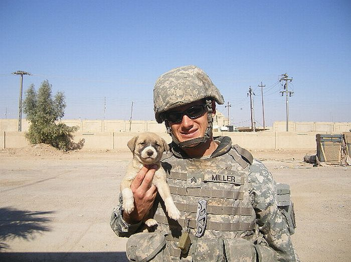 Собаки и кошки на руках военных (48 фото)