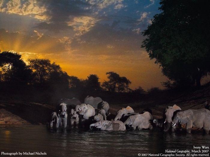 Слоники (100 фото)