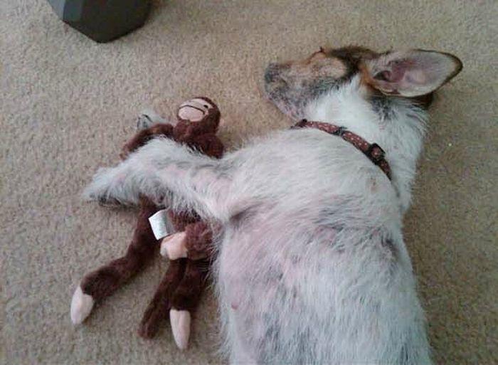 Бездомная собака нашла свой дом (15 фото)
