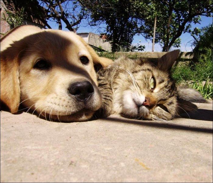 Любовь животных. Милые снимки (20 Фото)