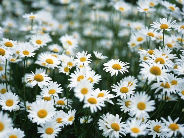 Цветочное настроение (20 Фото)