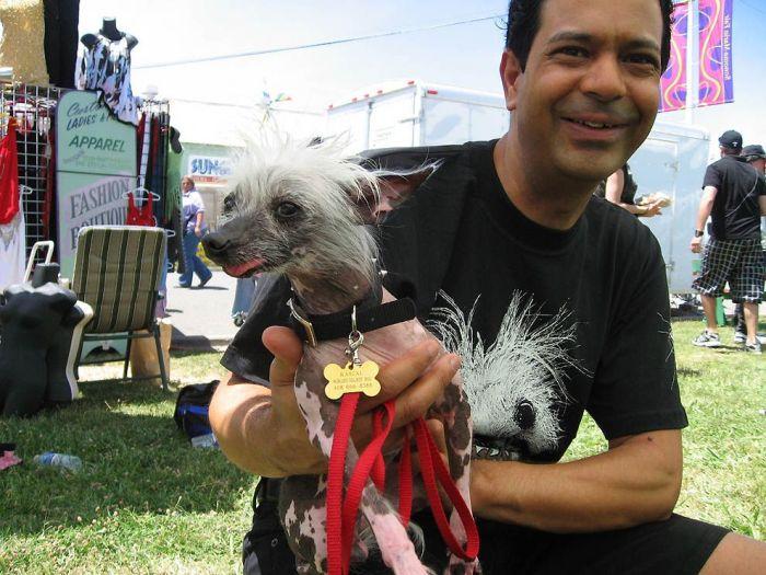 Конкурс на самую уродливую собаку (18 фото)