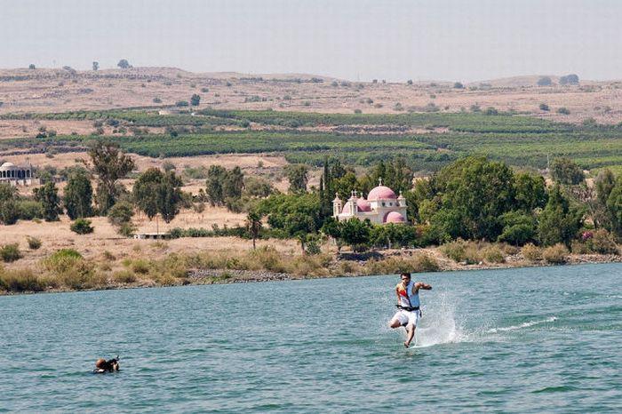 Бегающий по воде (7 фото)