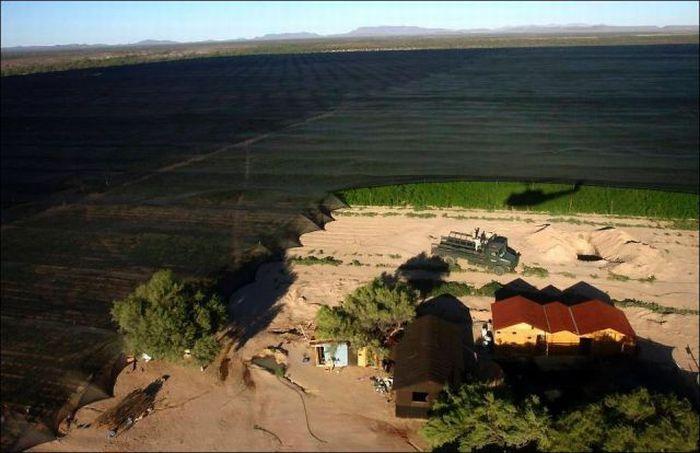 Огромная плантация конопли в Мексике (7 фото)