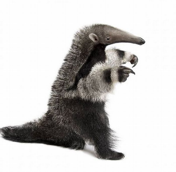 Удивительные портреты животных (20 фото)