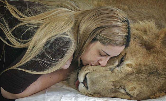 Женщины пытаются спасти льва (8 фото)