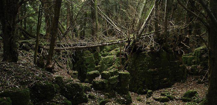 """Лес, вдохновивший """"Властелина Колец"""" (21 фото)"""