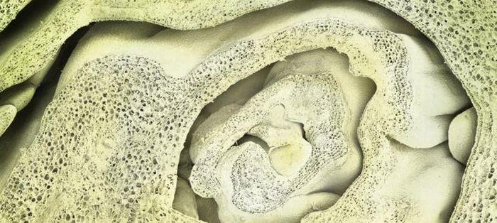 Еда под микроскопом (19 фото)