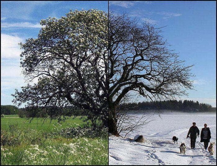Времена года (18 фото)