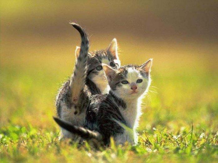 Забавные и милые маленькие котята (31 Фото)