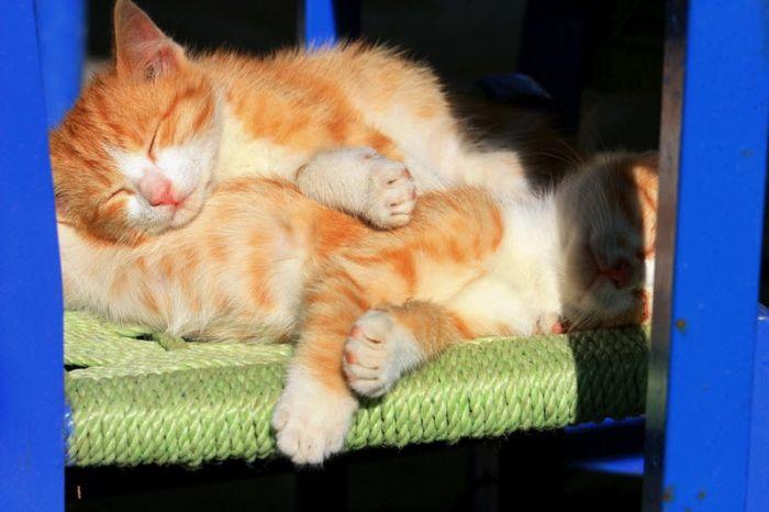 Цитаты великих людей о кошках (30 фото + текст)