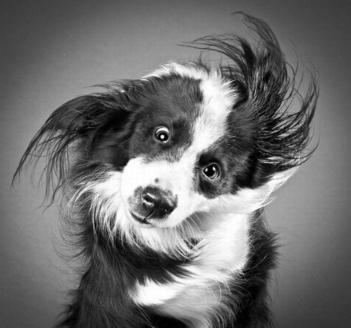 Собаки трясут головой (16 фото + 1 гифка)