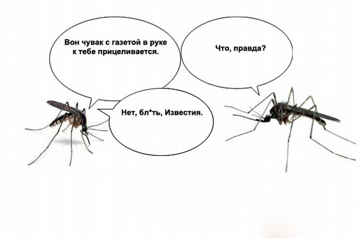 О чем говорят комары (10 картинок)