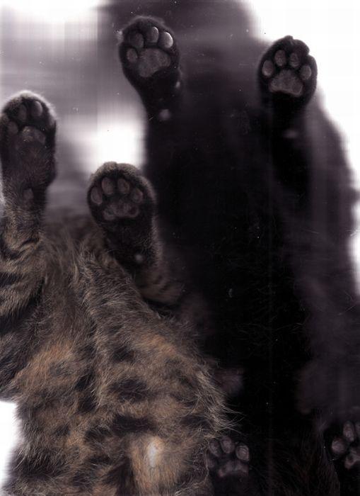 Отсканированные кошки (32 фото)