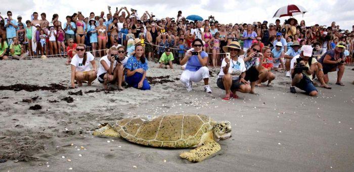 Свободу черепахе (12 фото)