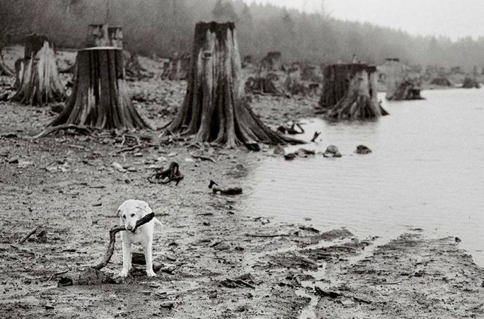 Старые собаки (32 фото)