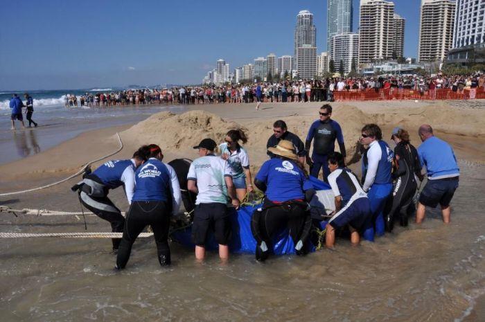 На пляж выбросился кит (4 фото)