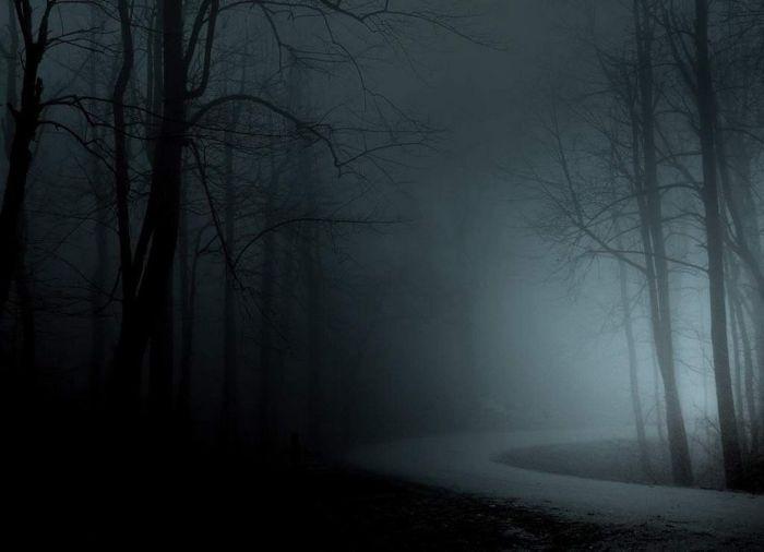 Туман в лесу (32 фото)