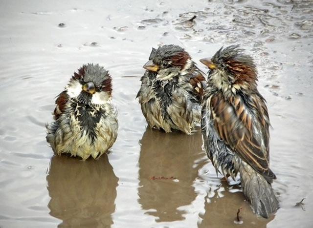 http://de.trinixy.ru/pics4/20110812/podb/1/rainy_day_14.jpg