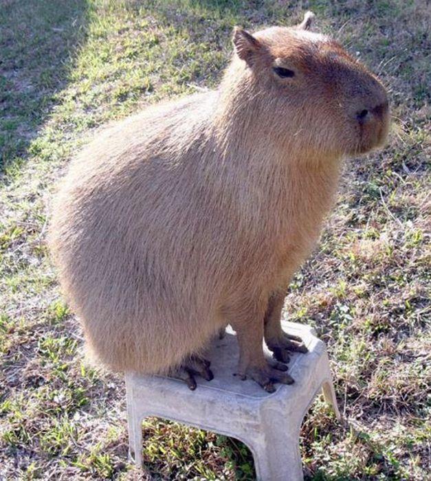 Необычное домашнее животное (12 фото)
